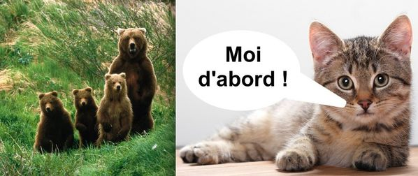 trois-ourson-ours-chaton-chat-avent-2012.jpg