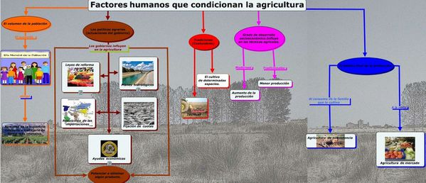 Econ Agricola..