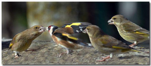 10bis - Oiseaux du jardin...