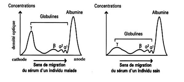 comparaison-de-serum.png