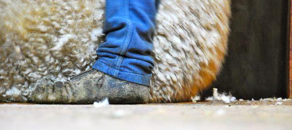 shearing 7863