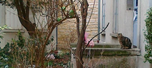 le-chat-rue-des-thermopyles-3---14022012.jpg