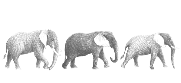 ELEPHANTS_JALBERT.png