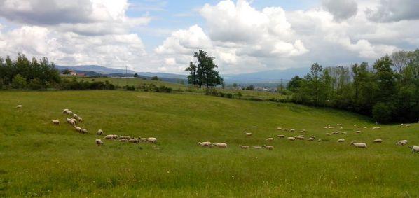 Auvergne-20140529_120912.jpg