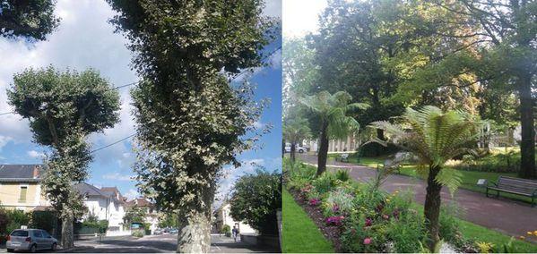 platanes-ou-palmiers-Aix-les-Bains.jpg