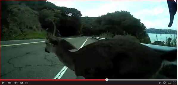 crash-cerf-vtt-gopro.JPG