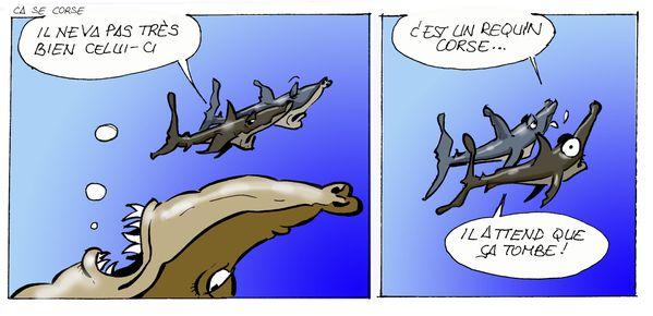 Requin-Corse-copie.jpg
