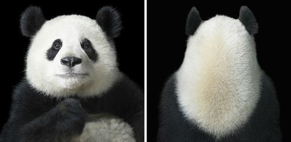 Tim-Flach-10.jpg