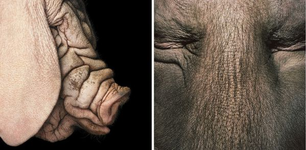 Tim-Flach-06.jpg