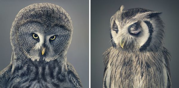 Tim-Flach-03.jpg