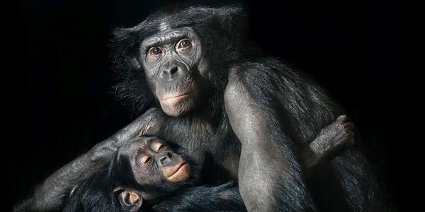 Tim-Flach-09.jpg