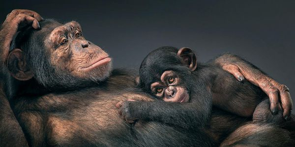 Tim-Flach-11.jpg