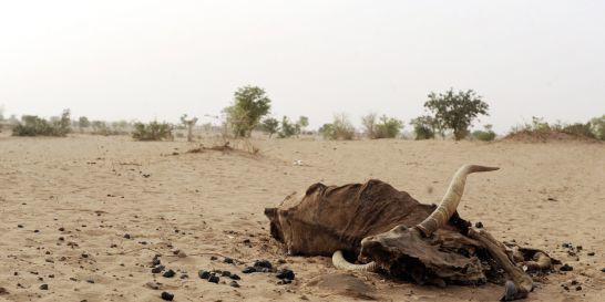 1374750_3_7b0e_la-desertification-est-a-l-origine-d-une-des.jpg