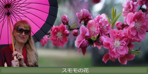 me-plum-blossoms---fb.jpg