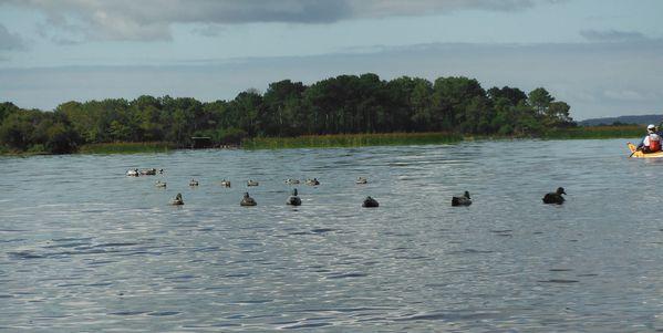 2013 kayak Sanguinet 021