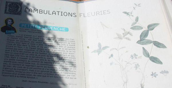 Chamb-ry-7916-Deambulation-fleurie-jpg