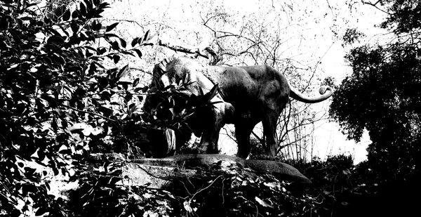 lion debout à gauche fontaine aux lions n&b