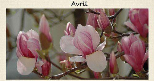 avril-1bis-.jpg