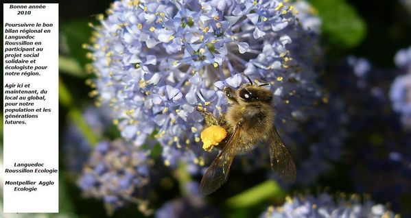 abeille-voeux.jpg