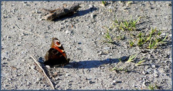 Ombre du papillon-01
