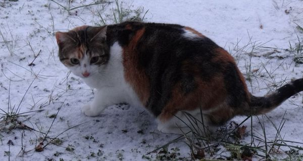 chats neige3