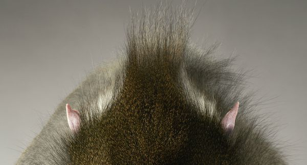 Tim-Flach-04.jpg