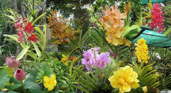 DIAPO-ORCHIDEES-L-AMANT.jpg