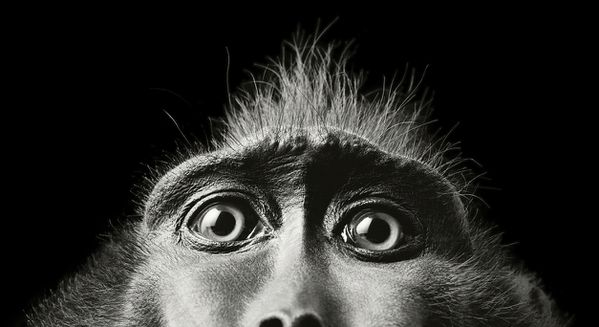 Tim-Flach-01.jpg