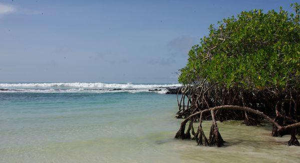 galapagos mangrove plage