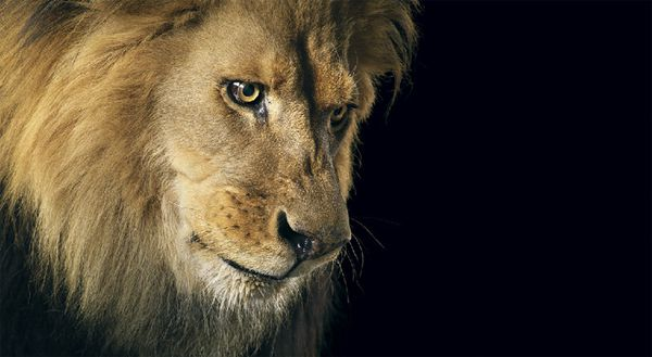 Tim-Flach-15.jpg