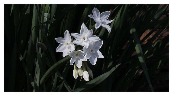 botanique 3044
