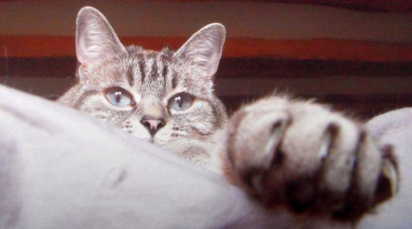 capucine est un tigre blog lola divine trentaine photos cha