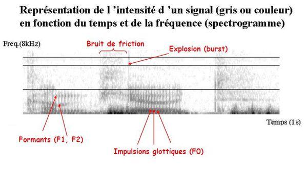 Spectrograme-de-la-Parole.JPG