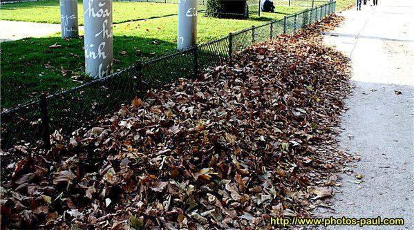 feuilles-mortes_01.jpg