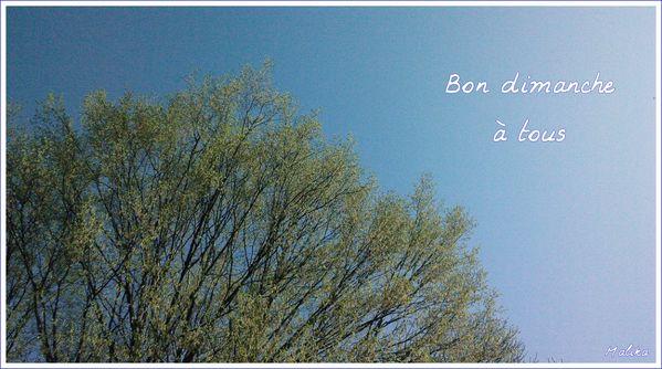 Bon-dimanche-01-04-2012.jpg