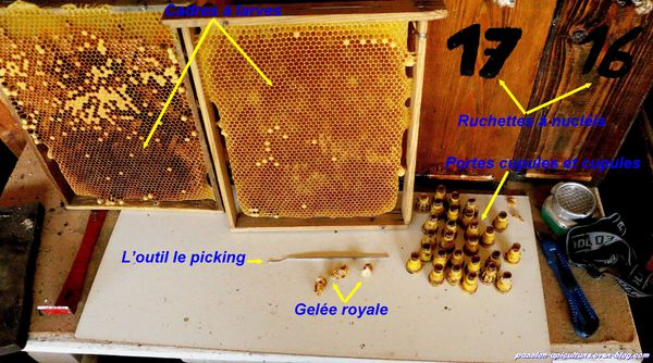Le picking apiculture