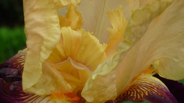 La-nature-est-belle--et-elle-vous-le-montre-082.JPG