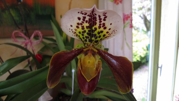 orchides (4)