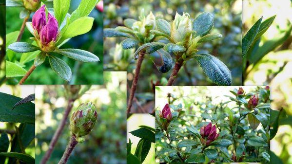 Fleurs-2011-04-14.jpg