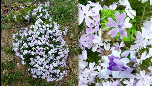 Fleurs-le-11avri-l20116.jpg