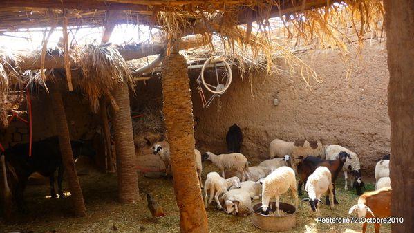 maroc2010-ferme (2)