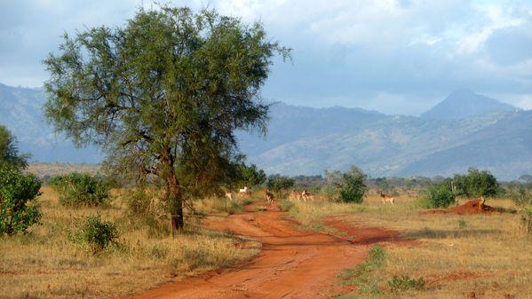 Paysage Taïta Hills