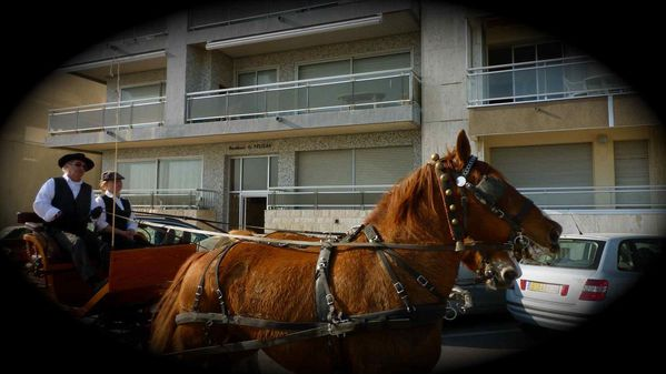 chevaux palavas
