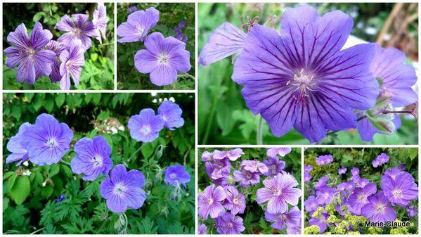 2-mardi-8-janvier-2013-1-les-plus-beaux-bleus-de-printemps1.jpg