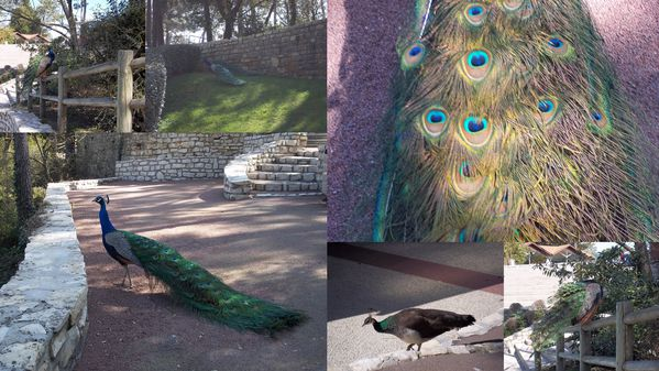 2012-03-26-zoo4.jpg