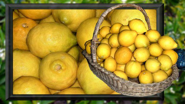 Image1-citrons-2012.jpg