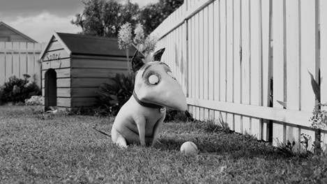 FRANKENWEENIE-photo-2.jpg