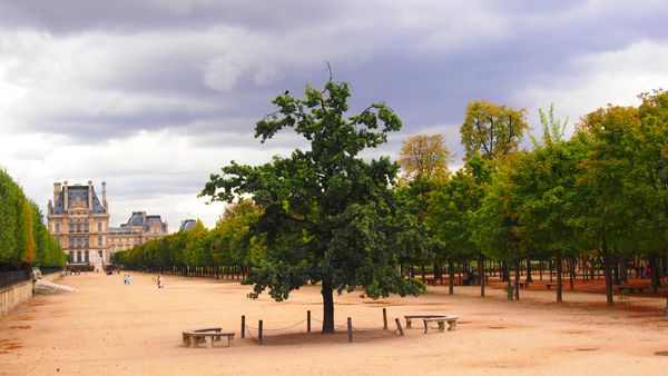 Tuileries-12-sept-2012.JPG
