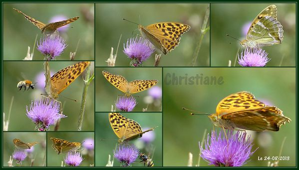 Papillons - Tabac d'Espagne