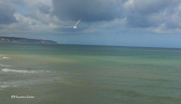 vol-d-oiseaux-3.jpg